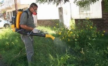 Renuevan trabajos contra el Dengue y la Leishmaniasis
