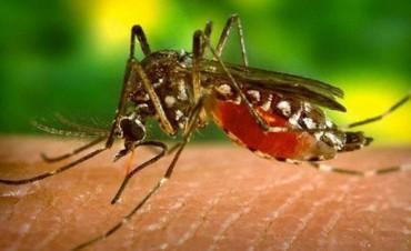 Detectaron el primer caso de dengue en Misiones